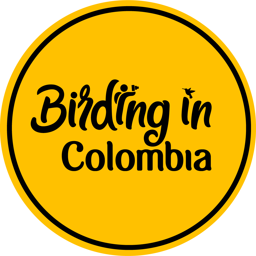 Birding In Colombia Logo Amarillo